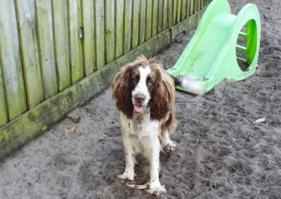 nelson-bay-kennels-guest-14@2x